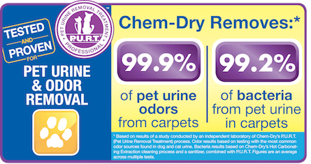 Pet Urine Removal Chem-Dry of St. Marys